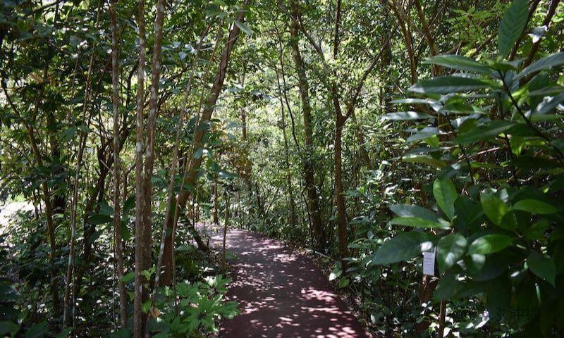 轟の滝の遊歩道