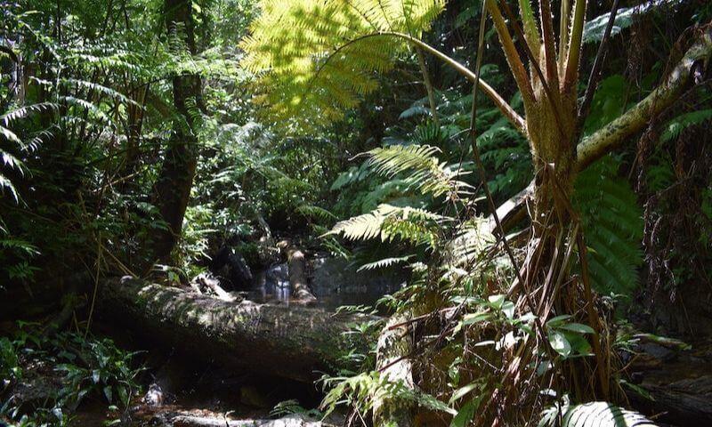 轟の滝の川
