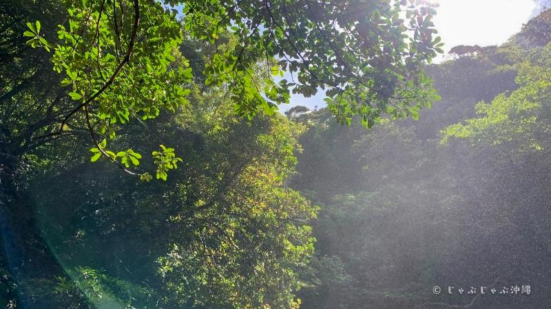 ター滝のマイナスイオン